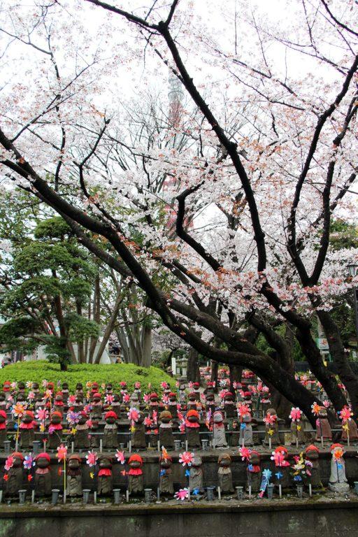 Zojo-ji Tokyo Sakura 2016_11
