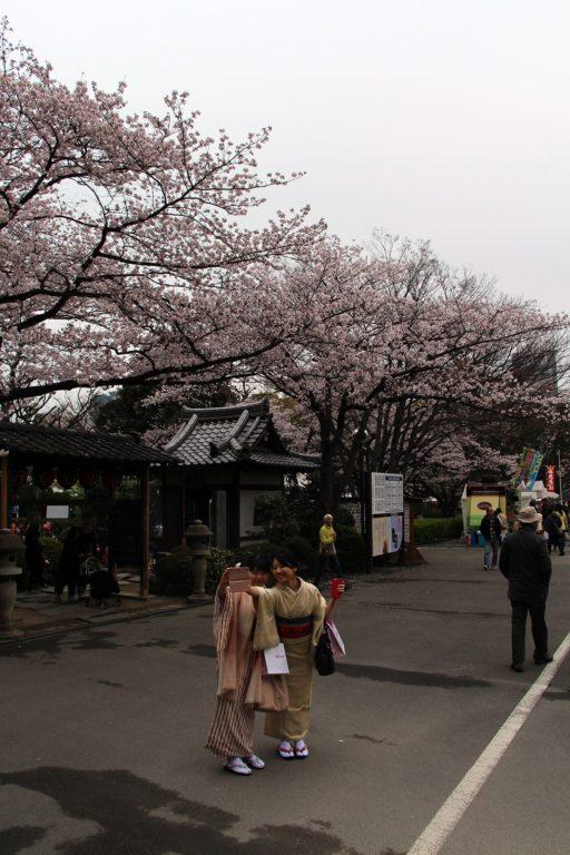 Zojo-ji Tokyo Sakura 2016_19