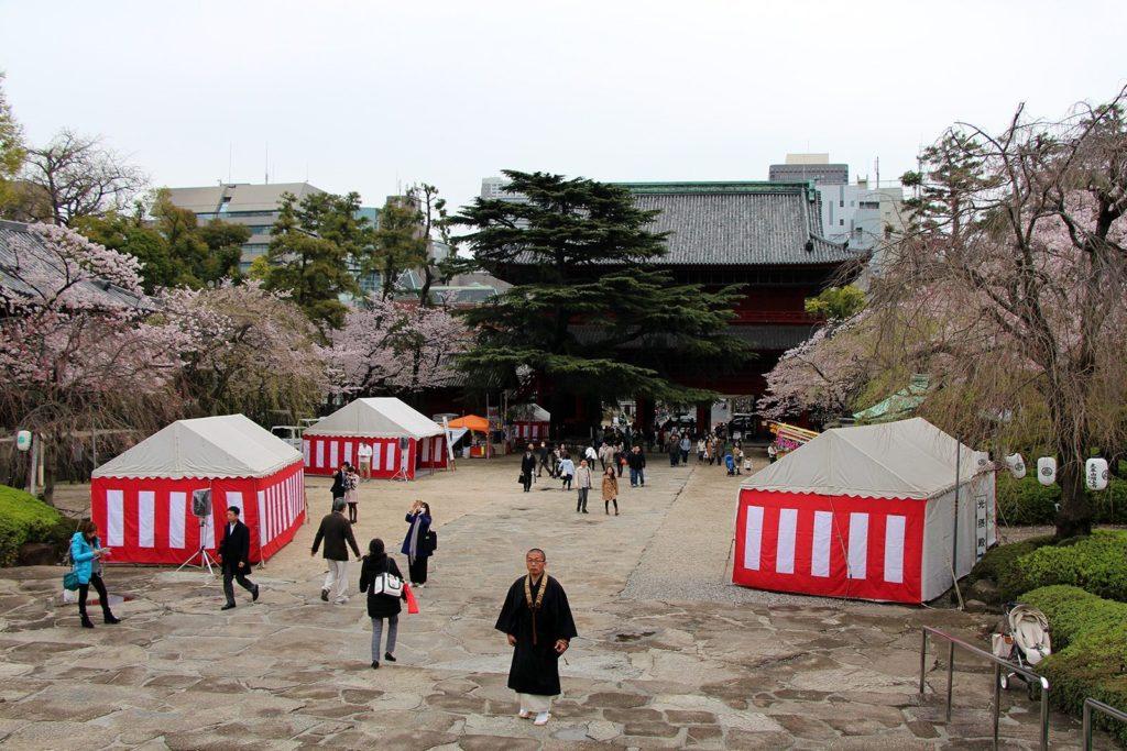 Zojo-ji Tokyo Sakura 2016_21