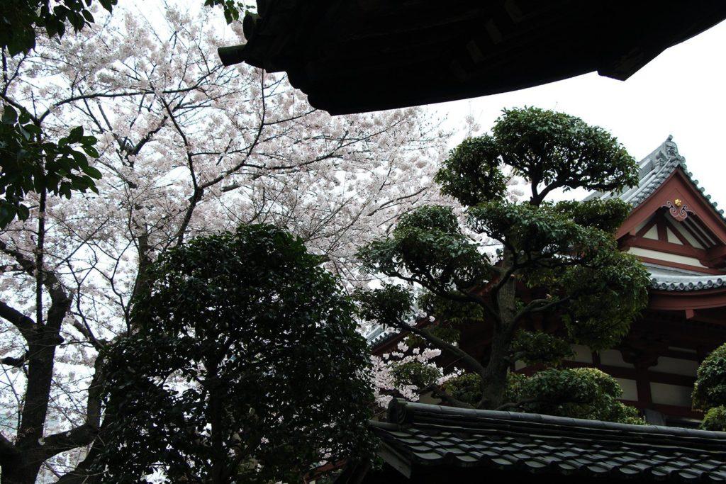 Zojo-ji Tokyo Sakura 2016_24