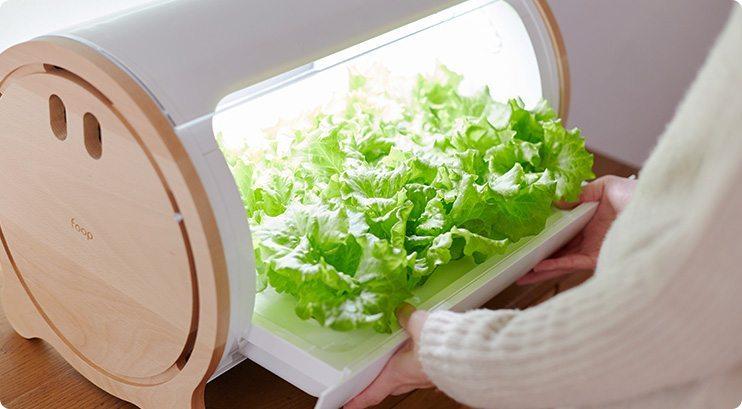 appareil plantation salade Japon_12