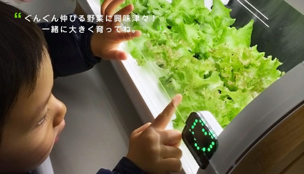 appareil plantation salade Japon_1jpg