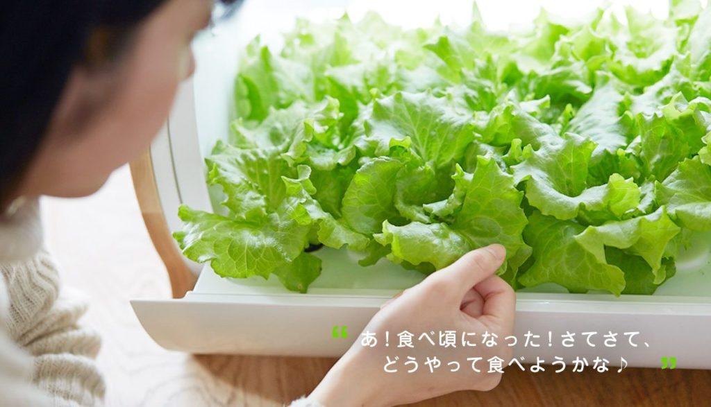 appareil plantation salade Japon_2