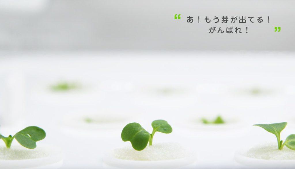 appareil plantation salade Japon_4