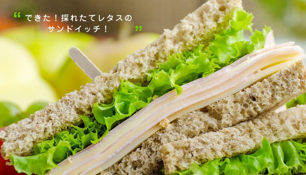 appareil plantation salade Japon_6