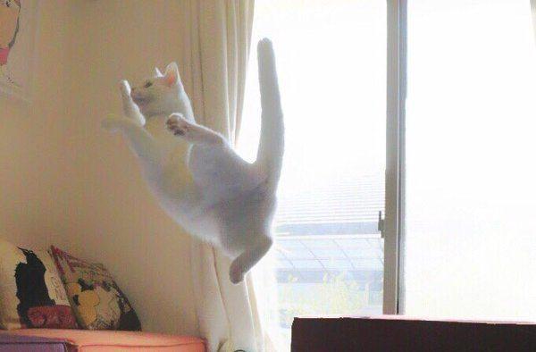 chats volants japon_3