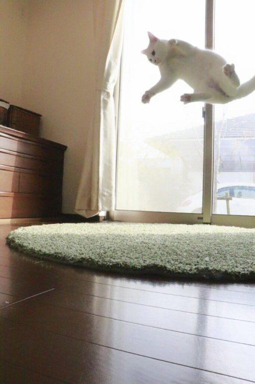 chats volants japon_4