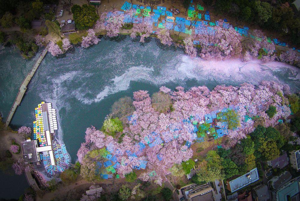 Danilo Dungo cerisiers drone japon_2