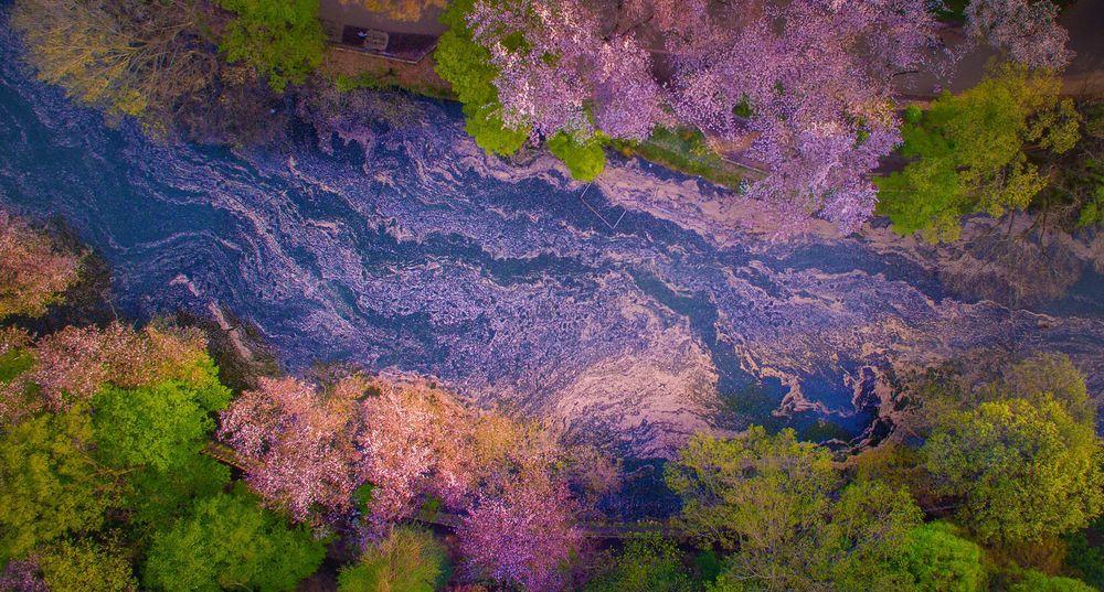 Danilo Dungo cerisiers drone japon_3