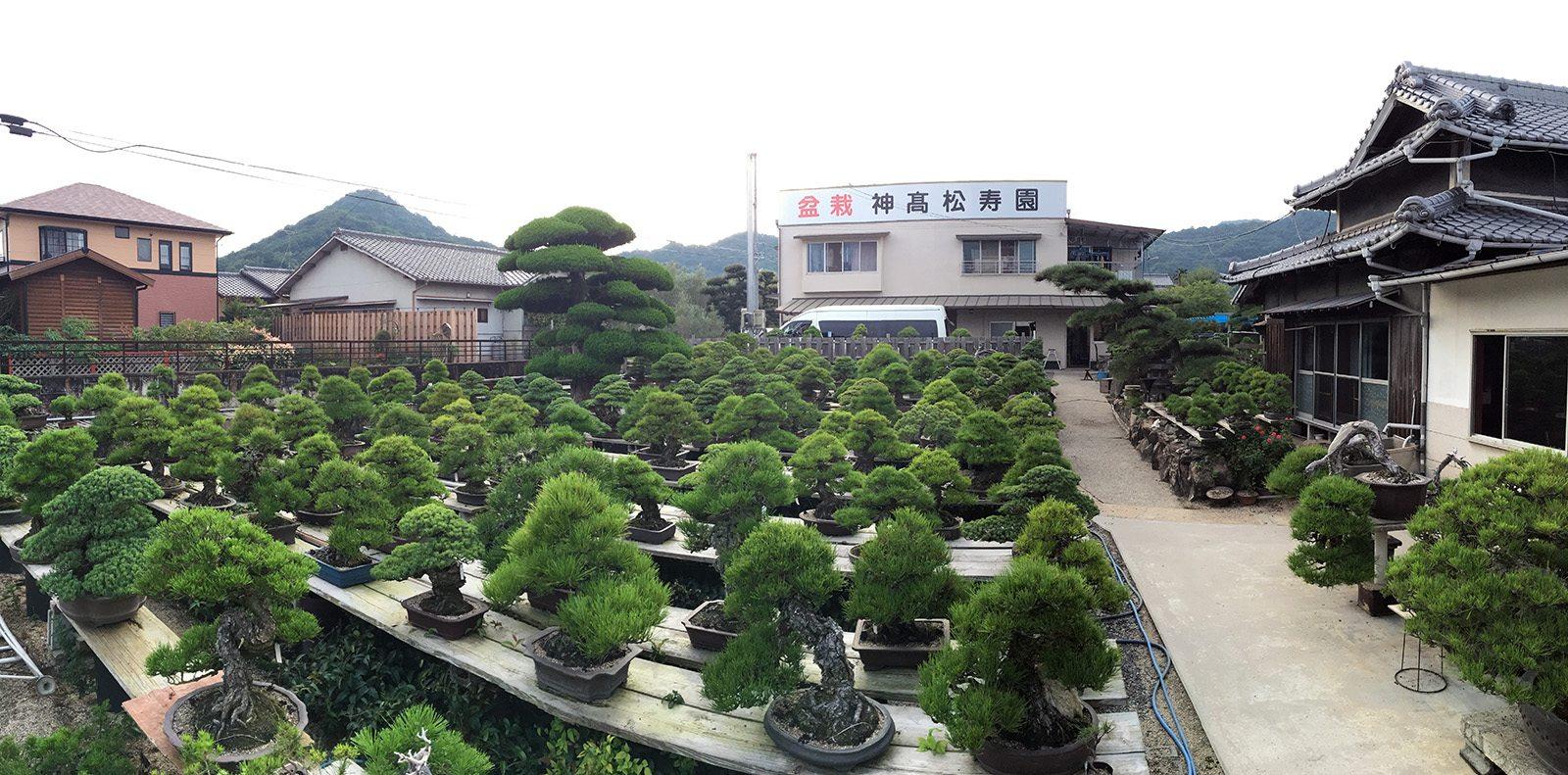 Bonsai kandaka shojuen takamatsu_14