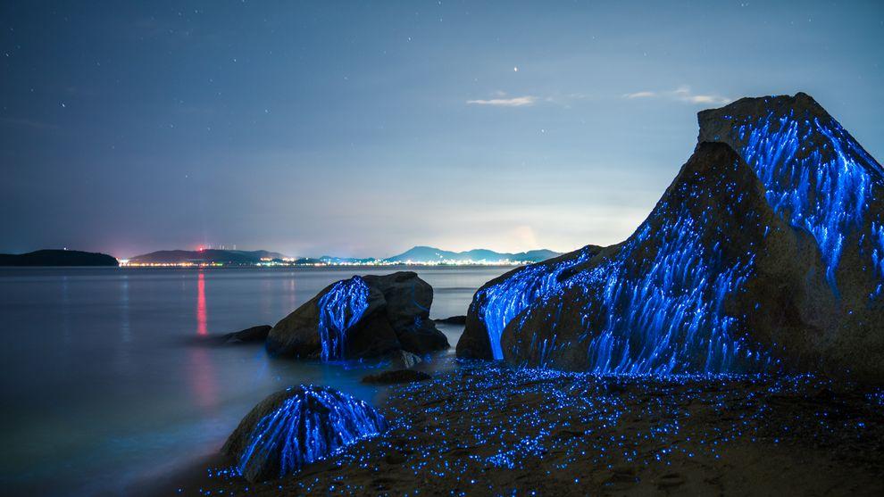 luciole mer Japon_1