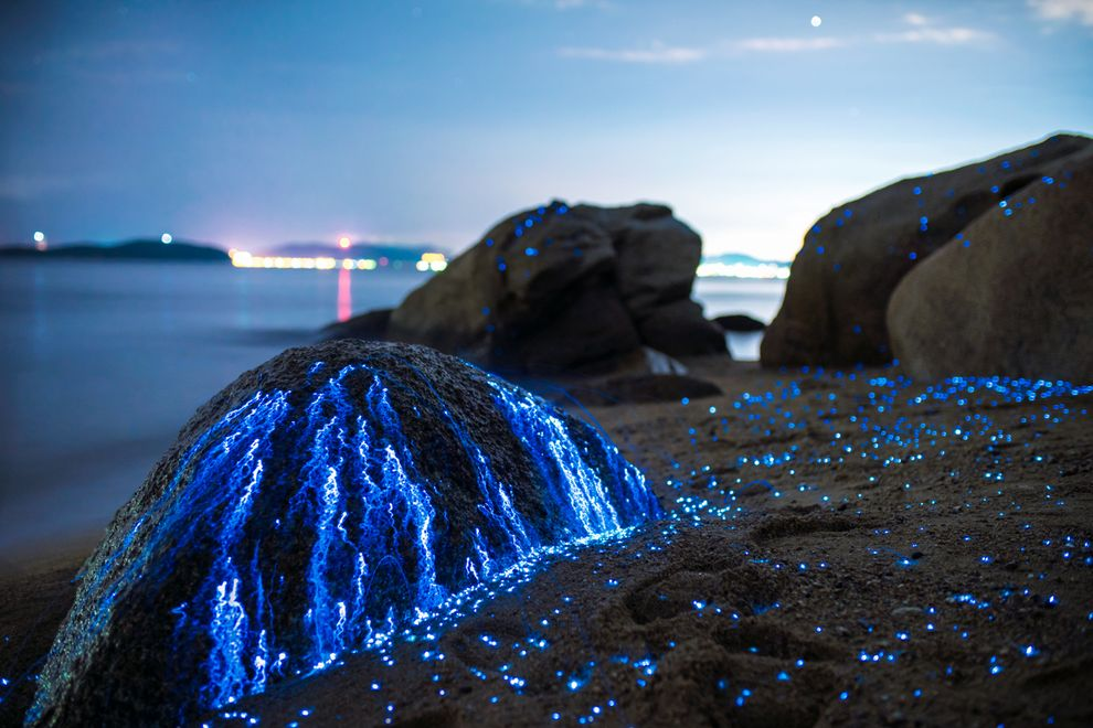 luciole mer Japon_3