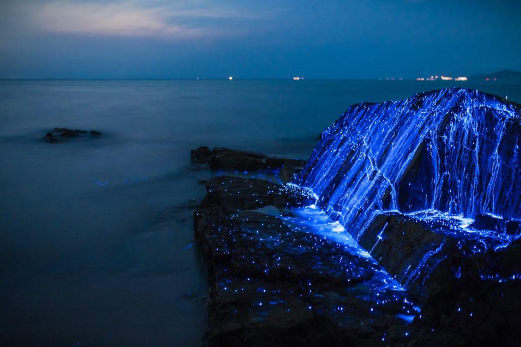 luciole mer Japon_4