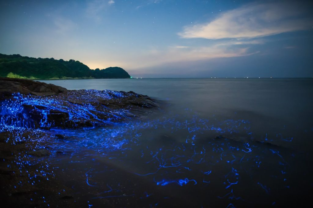 luciole mer Japon_6