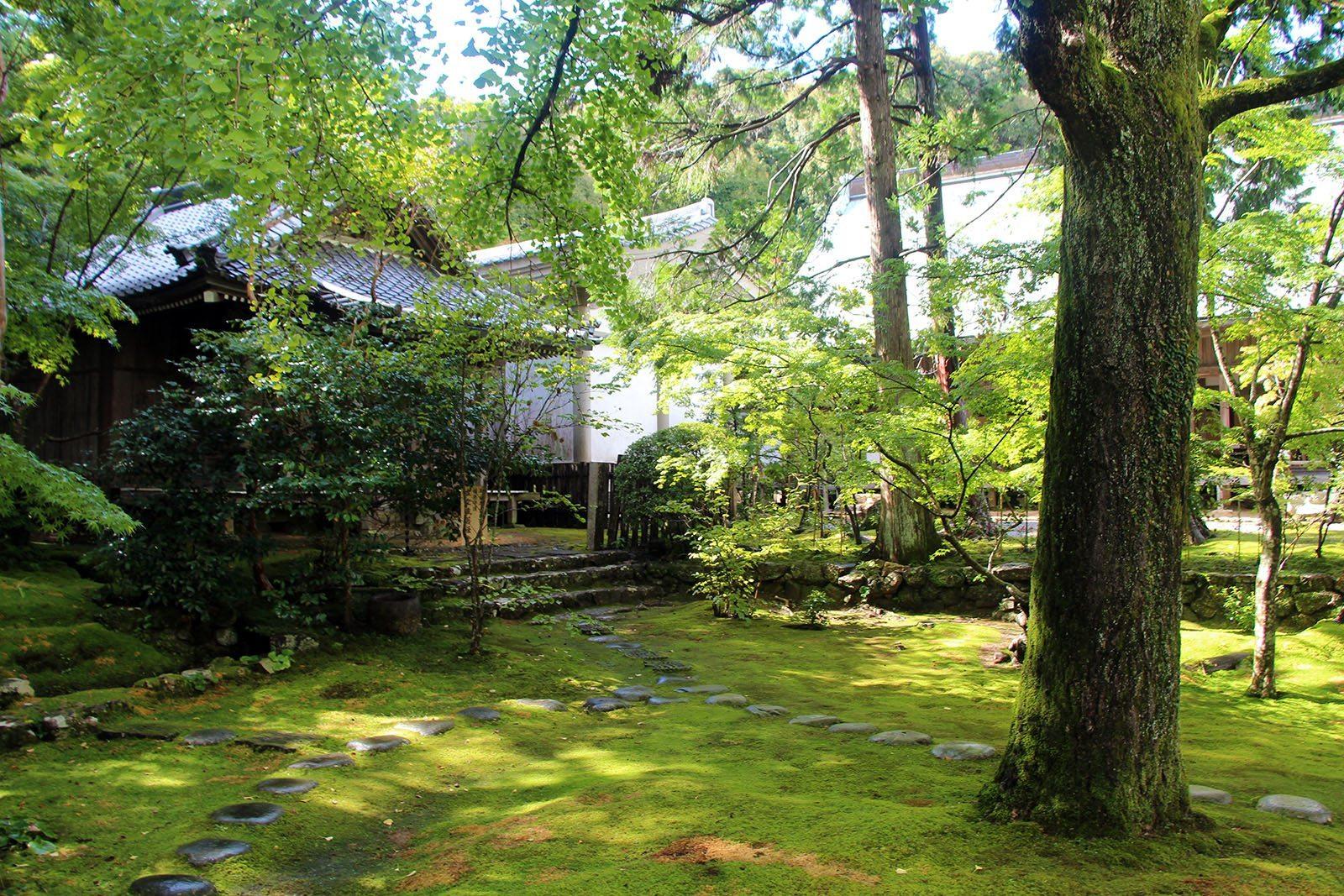 Chikurin-ji temple Shikoku_18