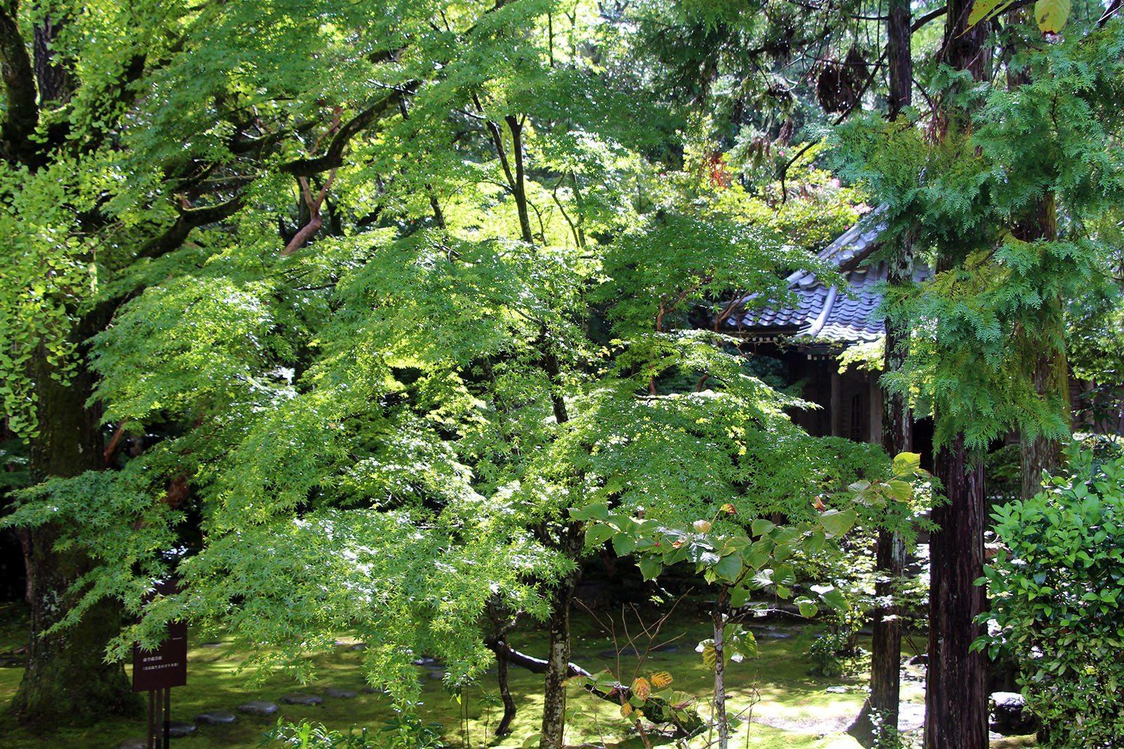 Chikurin-ji temple Shikoku_19