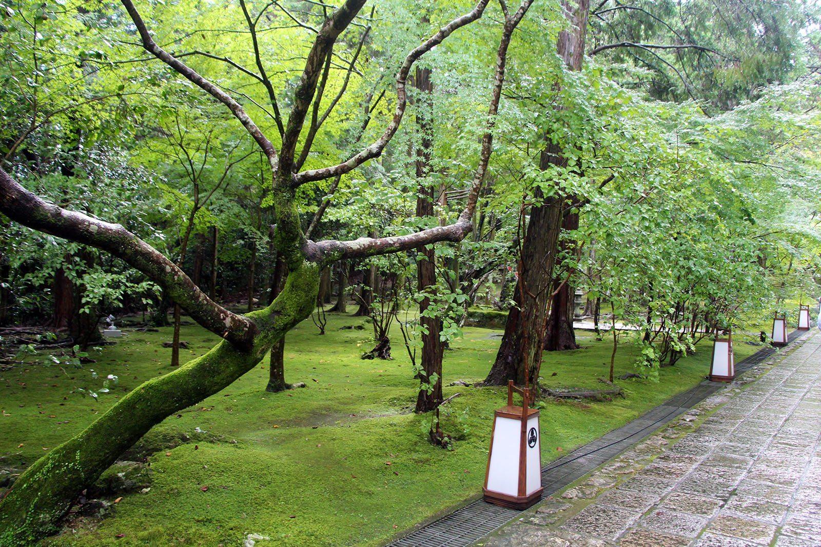 Chikurin-ji temple Shikoku_6