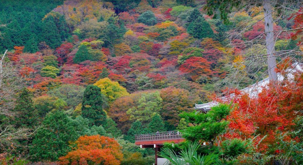 Kyoto Yoshimine-Dera_10