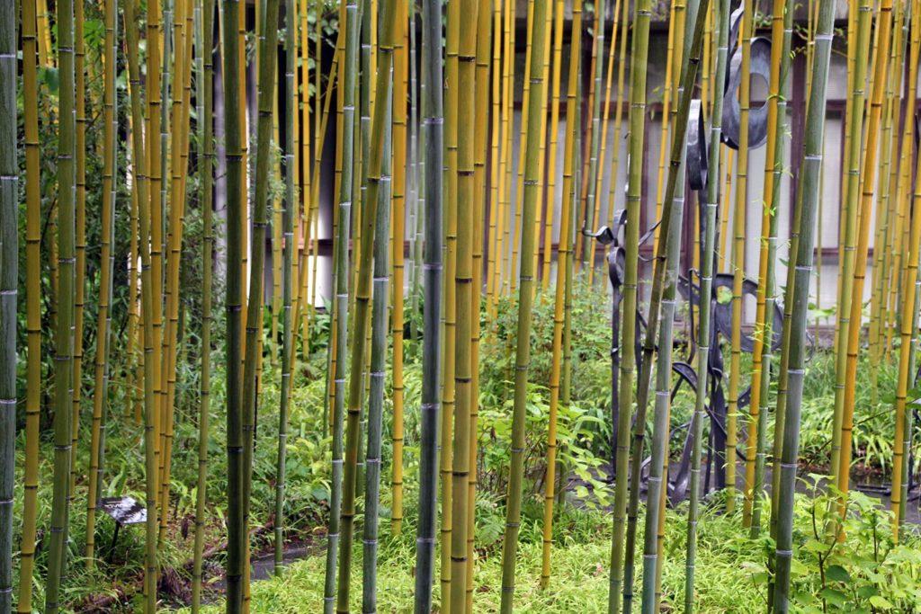 jardin botanique makino kochi japon_1