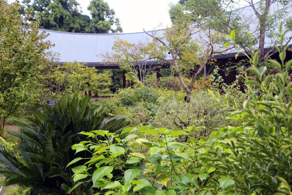 jardin botanique makino kochi japon_5
