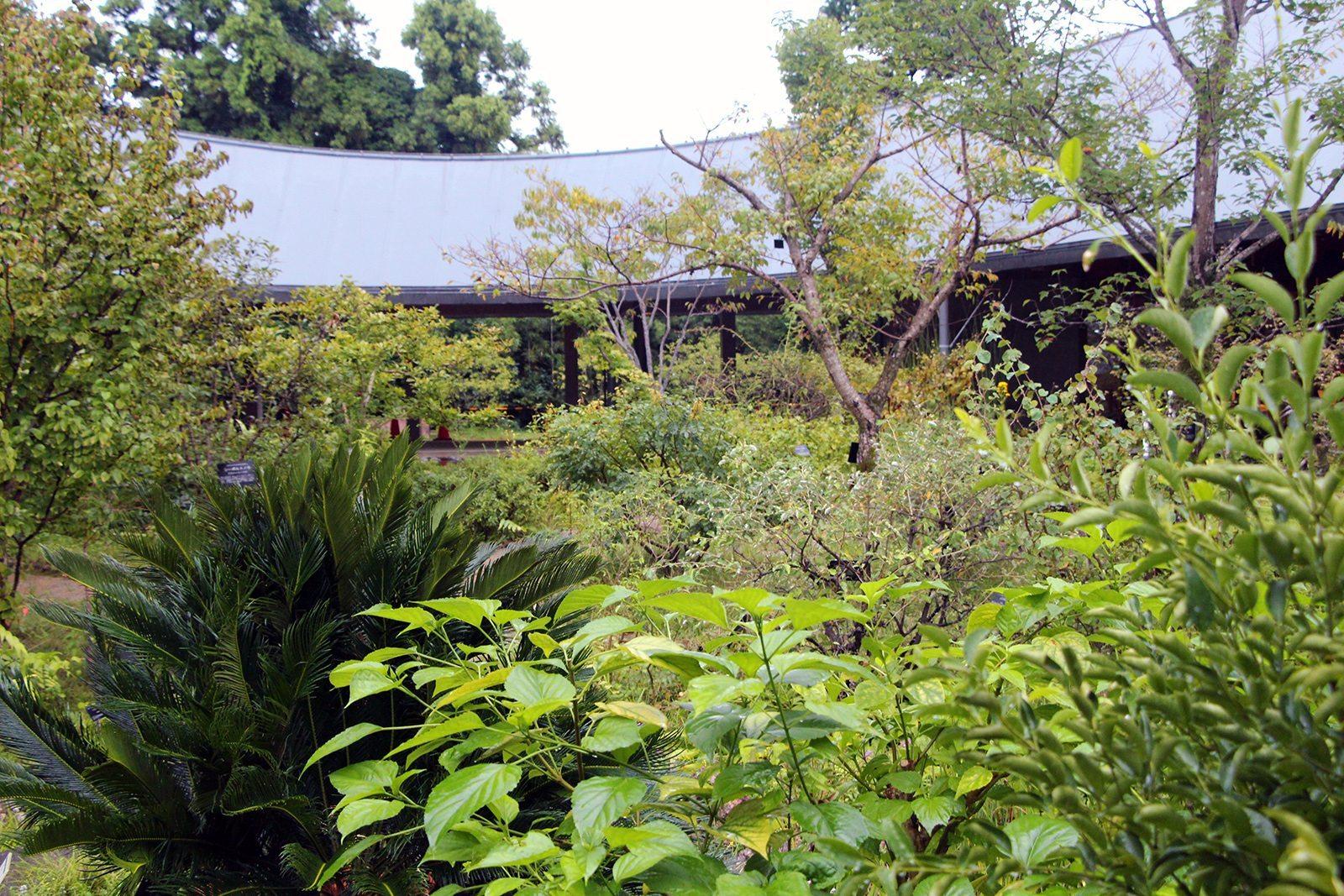 Le jardin botanique de monsieur makino le p re de la for Jardins jardin 2016