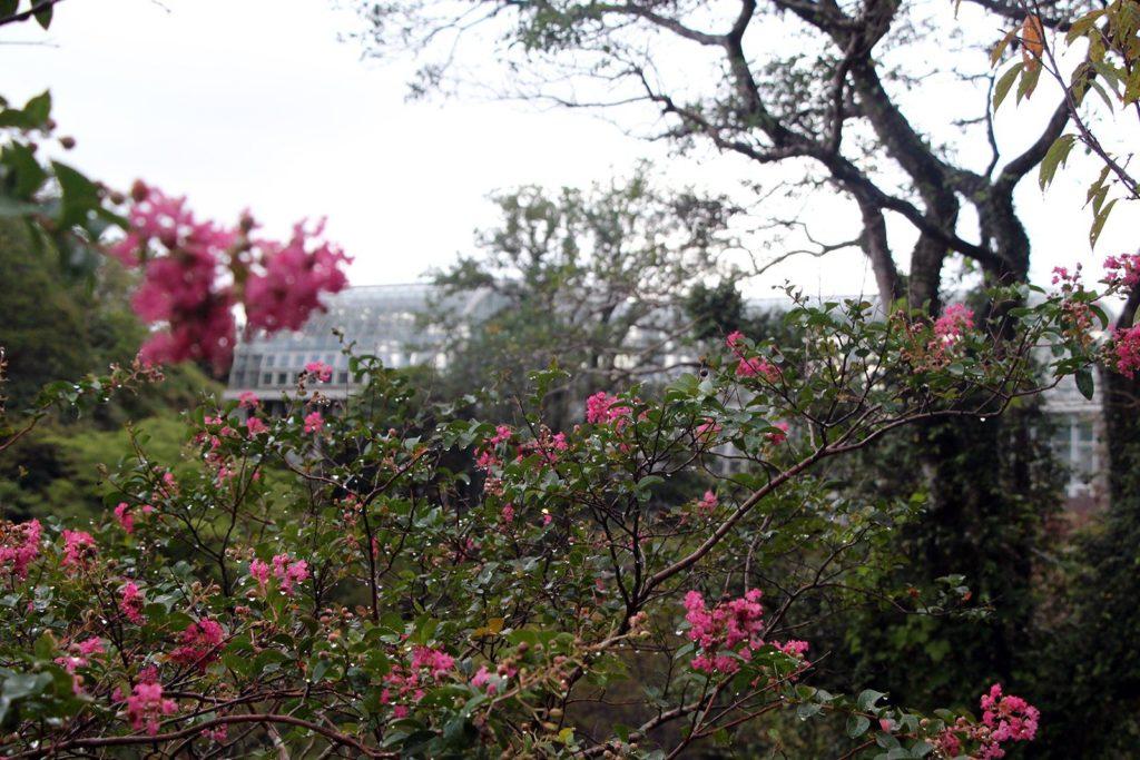 jardin botanique makino kochi japon_6