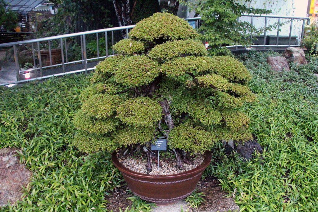 jardin botanique makino kochi japon_7