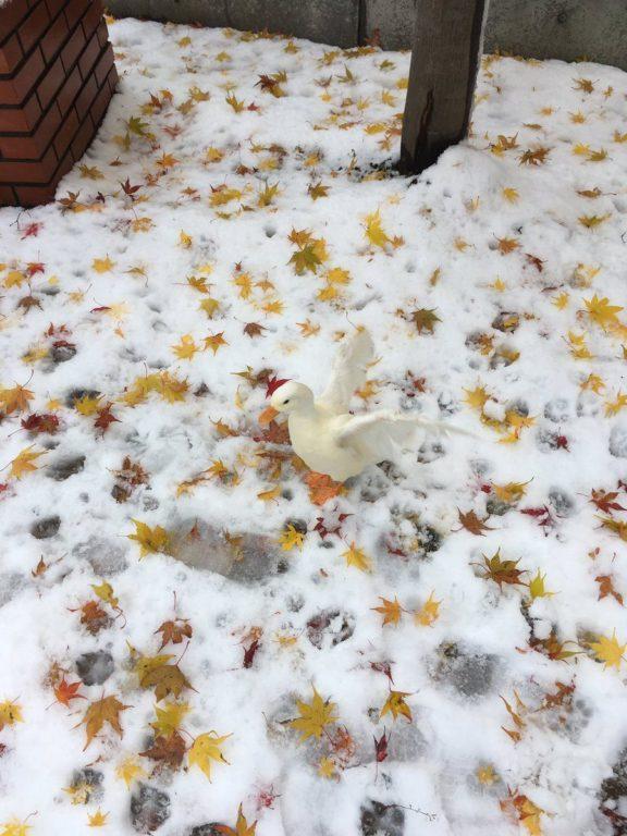 momiji neige_7