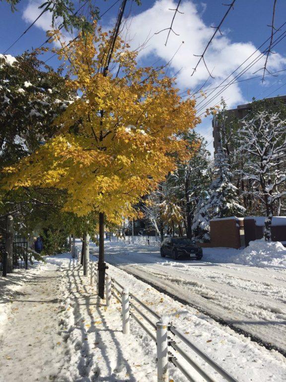 momiji neige_8