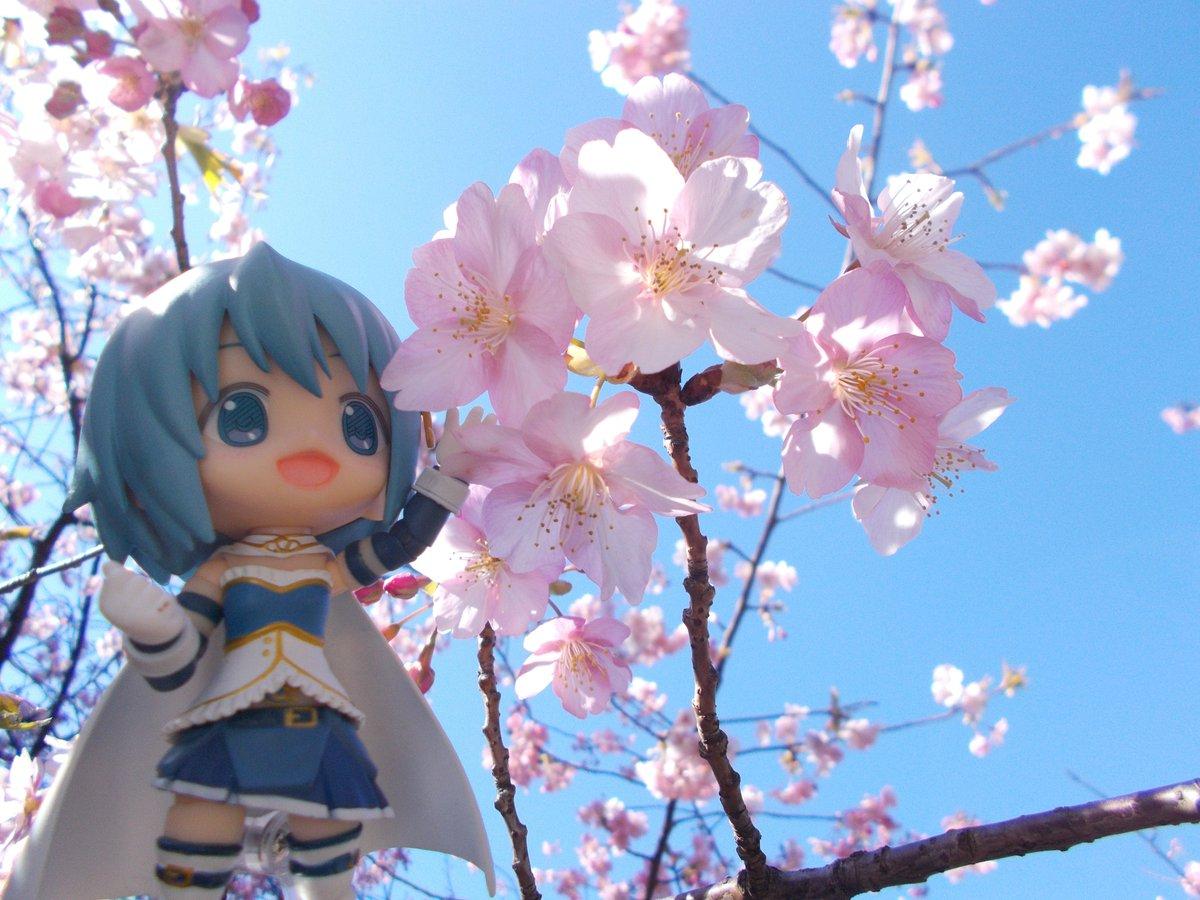 Dans une petite ville pr s de shizuoka les cerisiers sont d j en fleurs dozodomo - Parc de sceaux cerisiers en fleurs 2017 ...