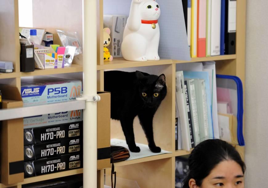 Au japon des chiens des chats et des chèvres au bureau pour